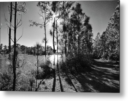 Path Metal Print featuring the photograph Shadowy Path by Don Youngclaus