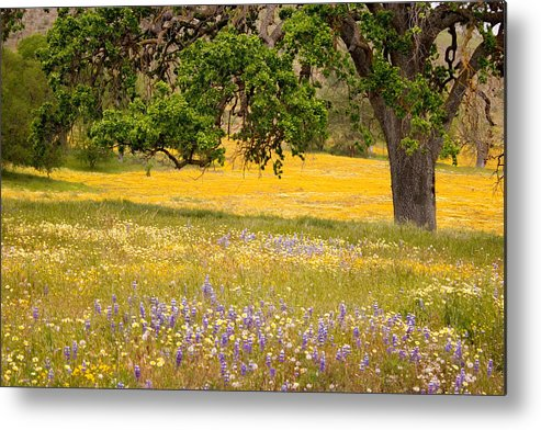 Spring Metal Print featuring the photograph Spring Wildflowers by Carol Leigh