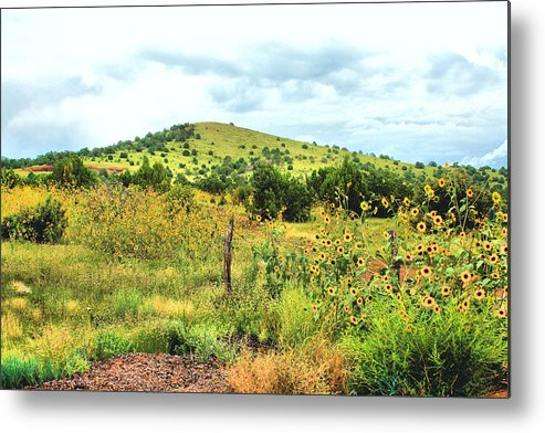 Photography Metal Print featuring the photograph Springerville Sunflowers 0060 by Sharon Broucek