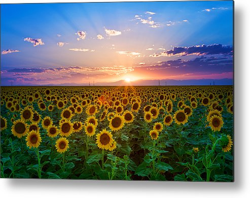 Horizontal Metal Print featuring the photograph Sunflower by Hansrico Photography