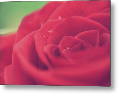 Macro Metal Print featuring the photograph Tears Of Love by Laurie Search