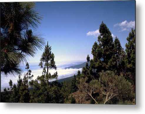 Tenerife Metal Print featuring the photograph Tenerife by Flavia Westerwelle