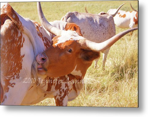 Texas Metal Print featuring the photograph Texas Longhorns by Jennifer Cannon