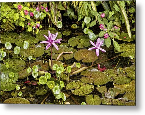 Flowers Metal Print featuring the photograph The Pond by Madeline Ellis