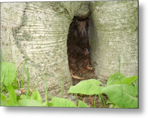 Landscape Metal Print featuring the photograph Tree Stump by Magi Yarbrough
