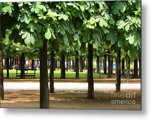 French Garden Metal Print featuring the photograph Trees Of Tuilieres by Carol Groenen