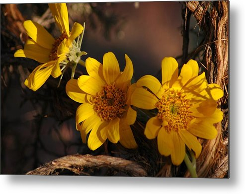 Flowers Metal Print featuring the photograph Under The Brush by Lori Mellen-Pagliaro