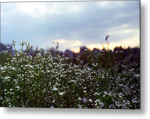 Field Metal Print featuring the photograph Waking Hours by Stephanie Puttre