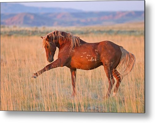 Wild Horse Metal Print featuring the photograph War Horse by Sandy Sisti