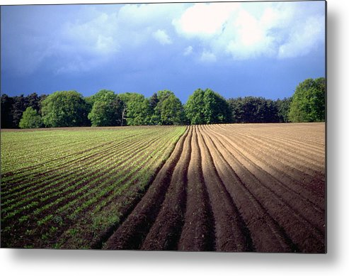 Wendland Metal Print featuring the photograph Wendland by Flavia Westerwelle