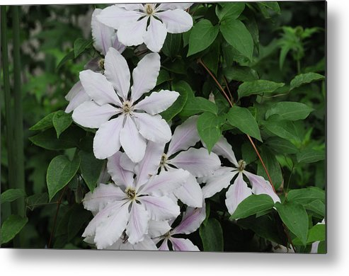 Flower Metal Print featuring the photograph White Flower by Terese Loeb Kreuzer