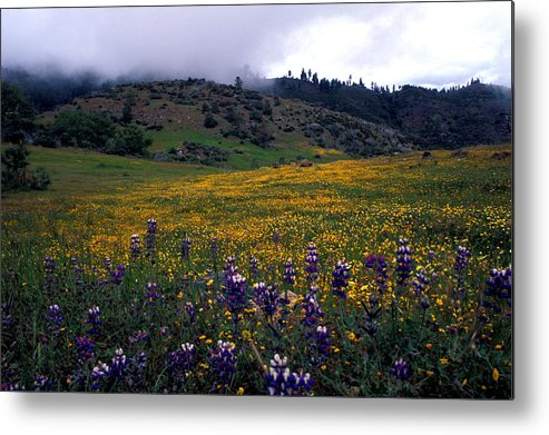 Landscapes Metal Print featuring the photograph Wildflowers In Fog 2 by Kathy Yates