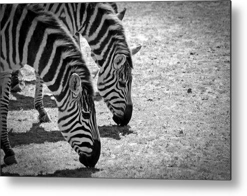 Zebra Metal Print featuring the photograph Zebra Beauty by Joann Mitchell