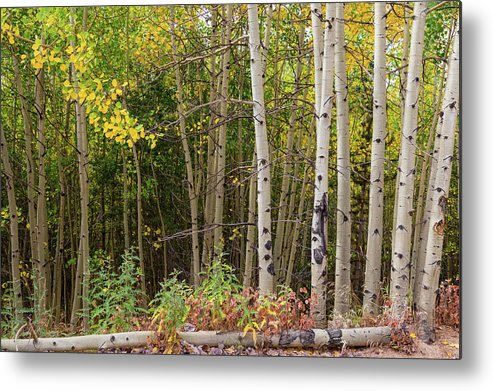 Nature Fallen Metal Print by James BO Insogna