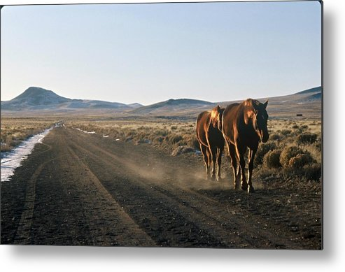 Horses Metal Print featuring the photograph Horses Cruising by Lynard Stroud