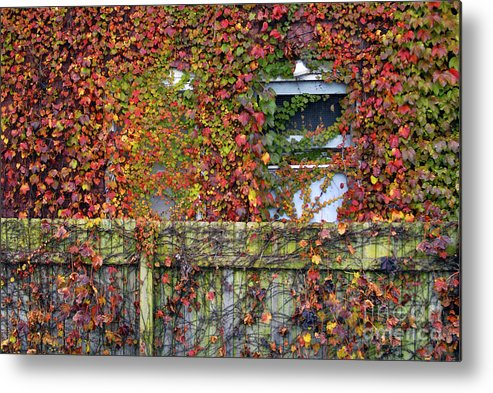 Historical Metal Print featuring the photograph Over The Back Fence by Paul W Faust - Impressions of Light