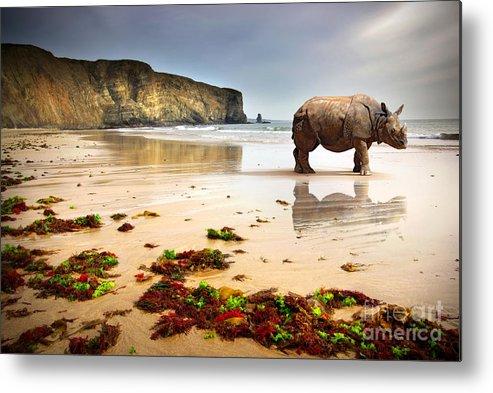 Africa Metal Print featuring the photograph Beach Rhino by Carlos Caetano
