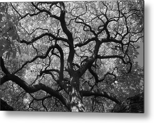 Tree Metal Print featuring the photograph Autumn Bloom by Sonja Anderson