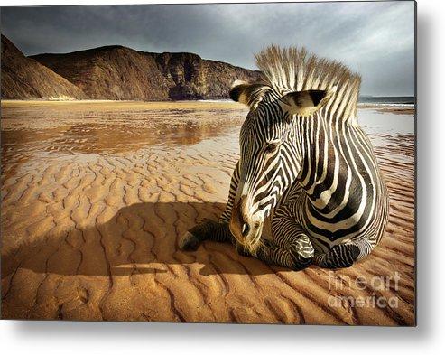 Africa Metal Print featuring the photograph Beach Zebra by Carlos Caetano