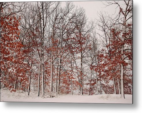 Winter Metal Print featuring the photograph Colorful Winters Day by Frozen in Time Fine Art Photography