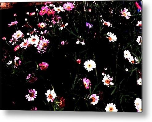 Photo Metal Print featuring the photograph Flower Field by Marsha Heiken