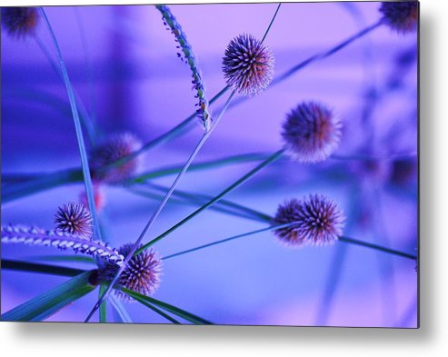 Nature Metal Print featuring the photograph Funky Weeds by Trudi Southerland