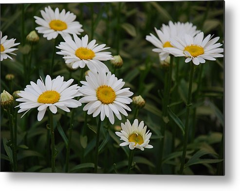 Flowers Metal Print featuring the photograph Me And My Friends by Michael L Gentile