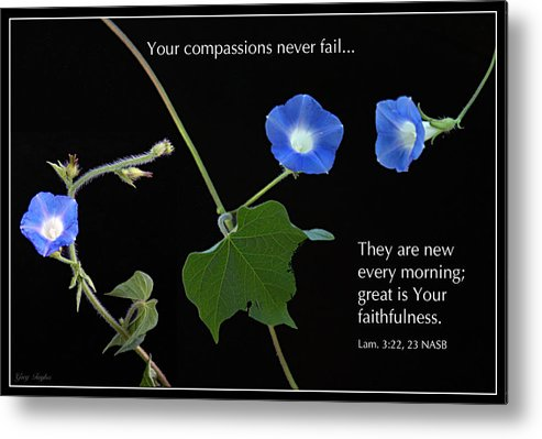 Morning Glory Metal Print featuring the photograph Morning Glory Composite by Greg Taylor