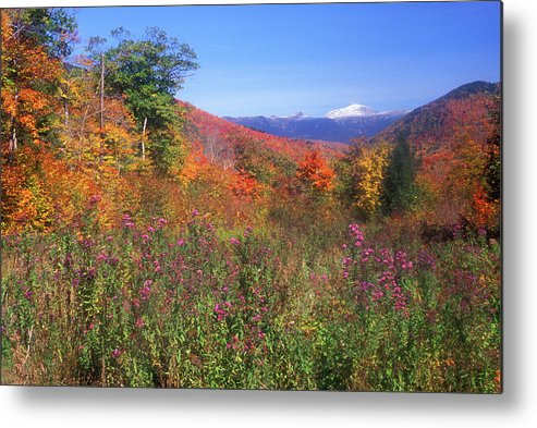 New Hampshire Metal Print featuring the photograph Mount Washingon Flowers Foliage by John Burk