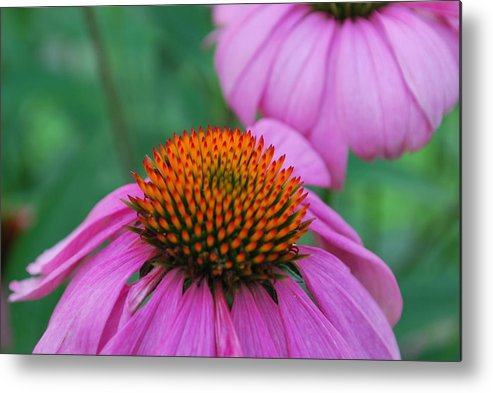 Flower Metal Print featuring the photograph Orange And Purple by John Roncinske
