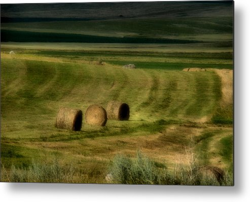 Hay Metal Print featuring the photograph Prairie Grace by Tingy Wende