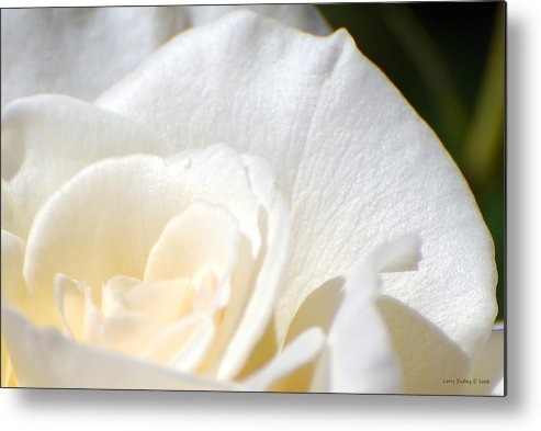 Flower Metal Print featuring the photograph Pure by Larry Keahey