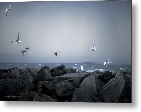 Landscape Metal Print featuring the photograph Seagulls In Flight by Larry Keahey