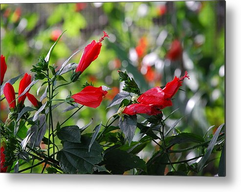 Flowers Metal Print featuring the photograph Sleeping The Day Away by Michael L Gentile