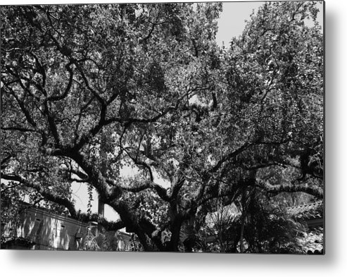 Black And White Metal Print featuring the photograph The Monastery Tree by Rob Hans