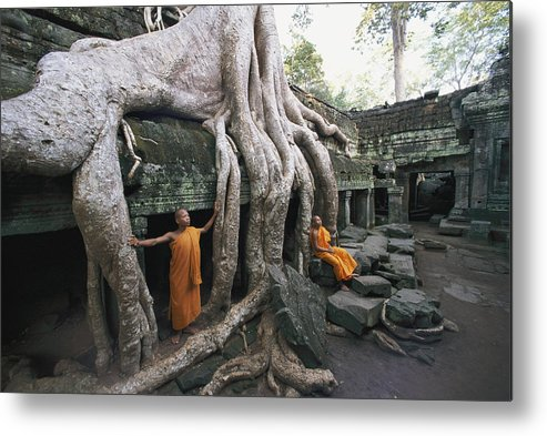 strangler Fig Trees Metal Print featuring the photograph The Roots Of A Strangler Fig Creep by Paul Chesley