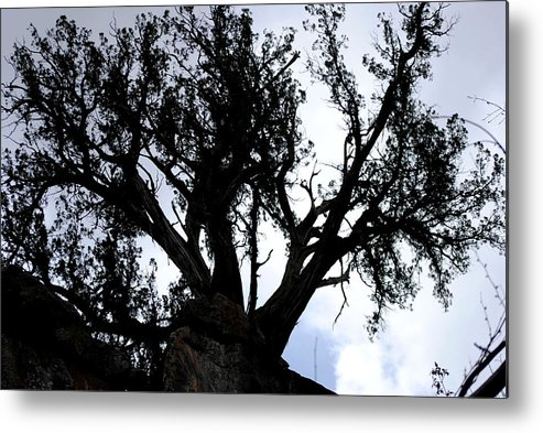 Tree Metal Print featuring the photograph Tough Tree by Jon Rossiter