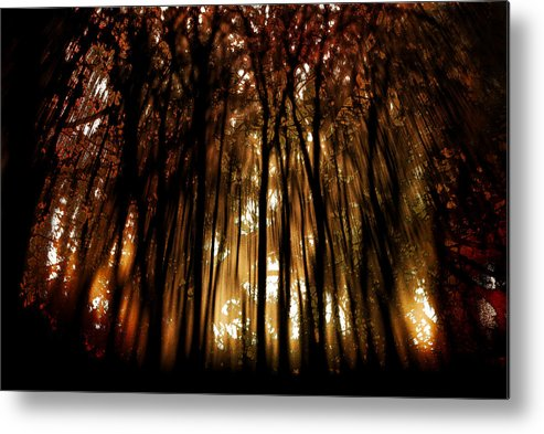 Digital Photography Metal Print featuring the photograph Trees 2 by Tony Wood