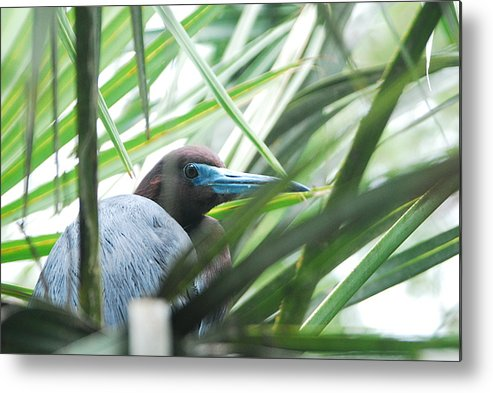 Wings Metal Print featuring the photograph Under Her Watchful Eye by Margaret Fortunato