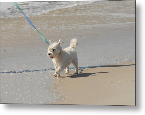 White Terrier Canvas Prints Metal Print featuring the photograph White Terrier by Joyce StJames