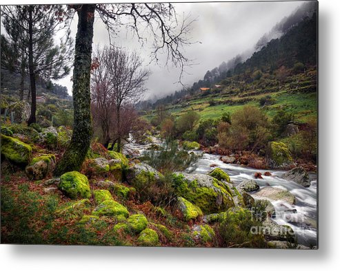 Autumn Metal Print featuring the photograph Woods Landscape by Carlos Caetano