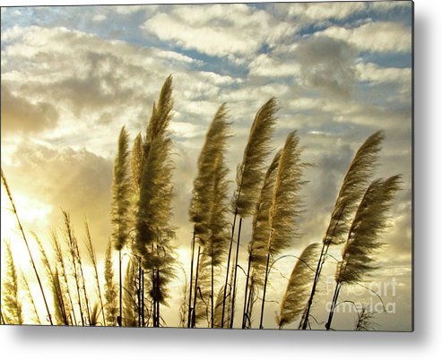 Nature Metal Print featuring the photograph Pampas Grass by Julia Hiebaum