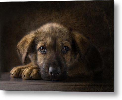Puppy Metal Print featuring the digital art Sad Puppy by Bob Nolin