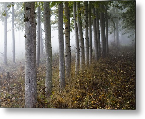 Fog Metal Print featuring the photograph The Woods by Rebecca Cozart