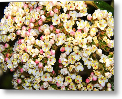 Tiny Flowers Metal Print featuring the photograph Tiny Flowers by Patrick Short