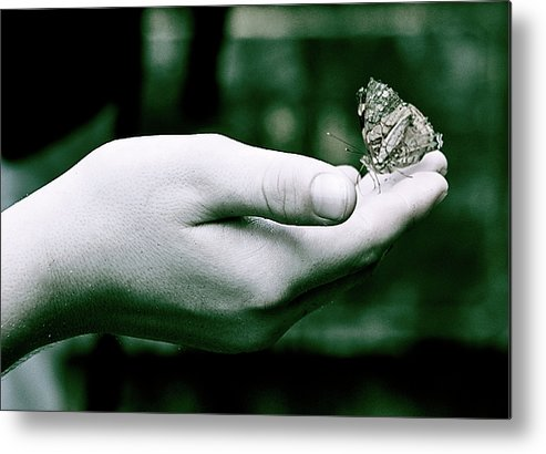 Butterfly Metal Print featuring the photograph Acceptance by Valerie Rosen