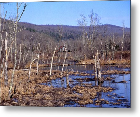Metal Print featuring the photograph Boxely Swamp2 by Curtis J Neeley Jr