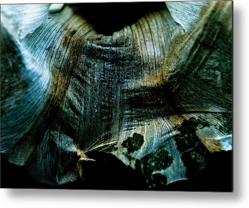 Flower Metal Print featuring the photograph Decaying Flower by Grebo Gray