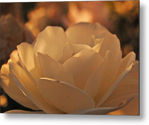 Open Metal Print featuring the photograph Rosy Afternoon 5 by Jean Booth