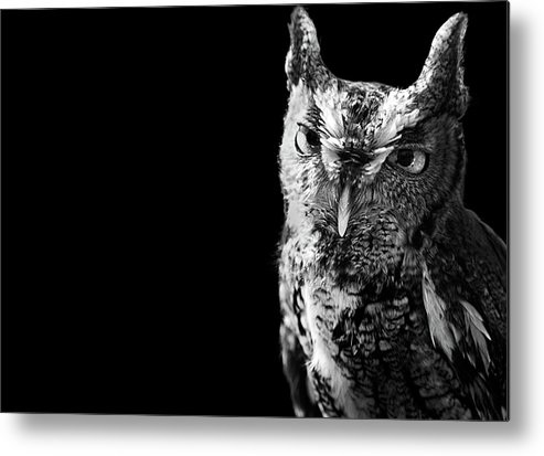 Horizontal Metal Print featuring the photograph Screech Owl by Malcolm MacGregor